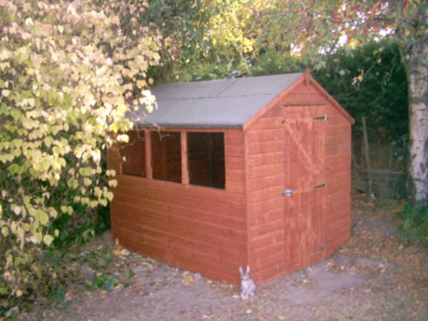 shirley the shed