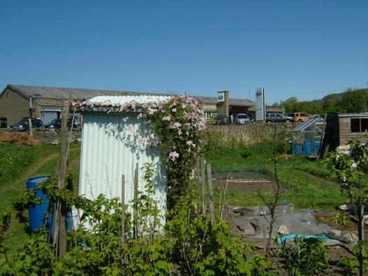 Allotment Shed - Angie