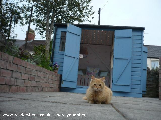 Photo of Mini Jeff, entry to Shed of the year-Cat