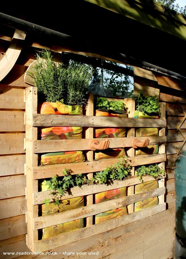Allotment Roof Shed - Joel Bird