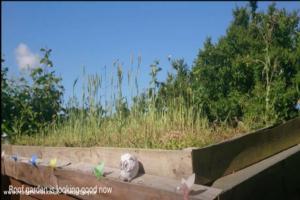 Odin's rest - Craig hall - rear garden
