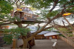 nanja monja cafe - Koji Ozeki - on the tree