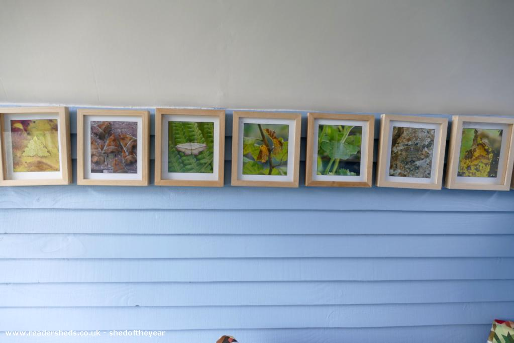 Photo of The Hut, entry to Shed of the year-Photos of moths from the garden