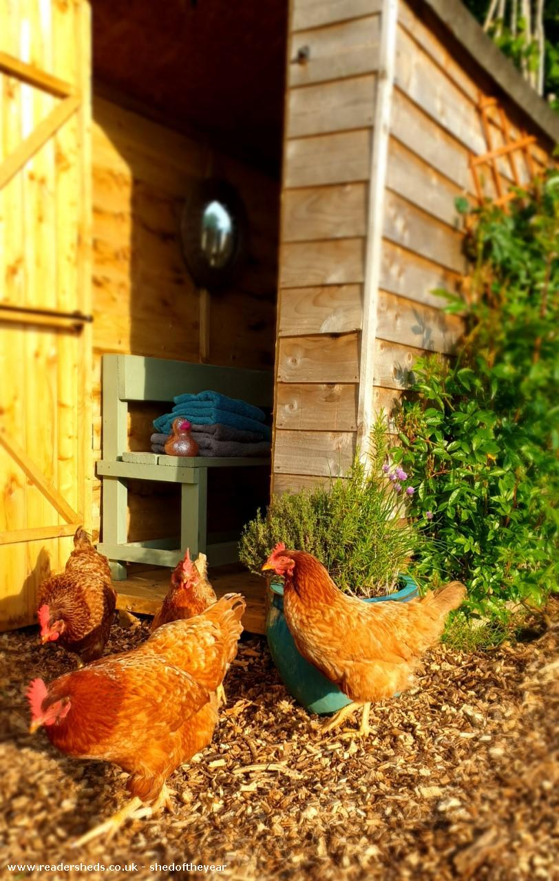 Photo of Al Fresco Shower Shed, entry to Shed of the year-Chickens pecking about