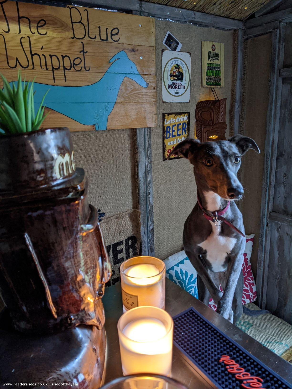 Photo of The Blue Whippet, entry to Shed of the year-Front view